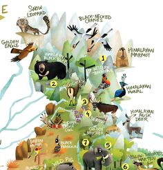 115 animals, 46 biodiversity hotspots, one giant illustration- here is the Wildlife Map of India, out on Green Humour to mark the Wi. Wildlife Of India, Life Map, Amur Leopard, Geography Map, India Map, Animal Tracks, Animal Science, Animal Posters, Wildlife Conservation