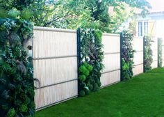 Fence with alternating living walls