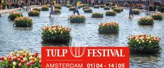 500.000 tulips in bloom during the 3rd edition of the Amsterdam tulip festival 2017. More than 500,000 tulips, over 60 locations throughout the capital ...