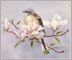 Птички и цветы . 62 изображения для творчества и вдохновения.. Обсуждение на LiveInternet - Российский Сервис Онлайн-Дневников