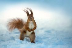 ***. Photographer Sergey Polyushko