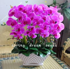 Cheap rare orchid seeds, Buy Quality phalaenopsis seeds directly from China rare orchids Suppliers: Phalaenopsis Orchids,Phalaenopsis seeds, office rare orchid seeds,bonsai flower seeds for home garden Indoor Orchids, Orchids Garden, Orchid Plants, Orchid Seeds, Flower Seeds, Flower Pots, Exotic Flowers, Pink Flowers, Beautiful Flowers