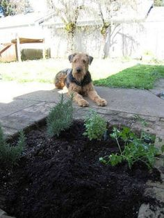 How to Plant a Dog-friendly Herb Garden | Canidae Blog