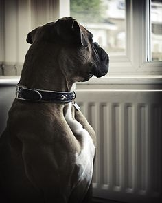 A happy moment for me, it remebered me my boxer