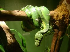 Rain Forest - Animals of the Amazon