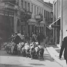 Evangelistrias street, Herd of sheep Greece Pictures, Old Pictures, Old Photos, Vintage Photos, Time Pictures, Athens Hotel, Athens Greece, Athens History, Zorba The Greek