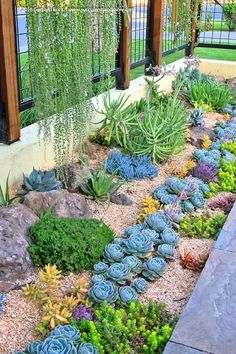 Succulents and More frontyard landscaping outdoor Garden, Succulent landscaping, Succulents Banana Trees Home Design Ideas, Pictures, Remo. Succulent Landscaping, Succulent Gardening, Front Yard Landscaping, Planting Succulents, Landscaping Ideas, Organic Gardening, Desert Gardening, Succulent Rock Garden, Backyard Ideas