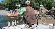 The penguin whisperer: A zoo keeper at Woodland Park Zoo in Seattle recreates…