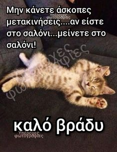Funny Memes, Jokes, Just In Case, Kittens, Lol, Greeks, Humor, Animals, Quotes