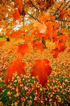 Autumn leaves and a cool breeze. Autumn leaves and a cool breeze. Autumn leaves and a cool breeze. Autumn leaves and a cool breeze. Autumn Day, Autumn Leaves, Winter, Fall Days, Fruits Decoration, Autumn Scenes, Seasons Of The Year, All Nature, Fall Pictures