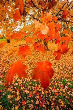Fall in Wisconsin, USA..
