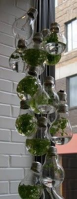 Hanging water garden using light bulbs. Maybe I should start with air plants or mini terrariums. Light Bulb Terrarium, Hanging Terrarium, Mini Terrarium, Hanging Plants, Water Terrarium, Terrarium Ideas, Succulent Terrarium, Light Bulb Plant, Planter Ideas