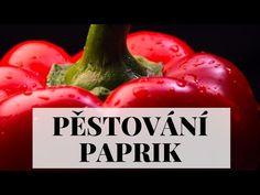 Pěstování paprik - ze semínka krok za krokem - YouTube Eggplant, Stuffed Peppers, Vegetables, Youtube, Food, Red Peppers, Stuffed Pepper, Essen, Eggplants