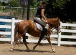 Belle is a 3 year old, 13 hand, registered BLM mustang. She can be ridden English or Western and clips, ties and trailers. She will come to you in the corral or the pasture. Adoption fee negotiable to caring home.