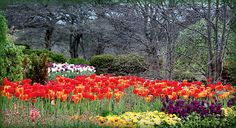 Spring arrives at the Cantigny Gardens in Wheaton, Illinois.