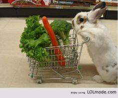 Rabbit goes shoppig
