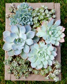 Beginner's Guide for Cool Woodworking Projects for Garden – Gardening Decor Succulent Wall Planter, Succulent Frame, Succulent Arrangements, Succulents Garden, Cedar Planter Box, Rustic Fall Decor, Cool Woodworking Projects, Garden Living, Plant Shelves
