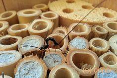 Kuvahaun tulos haulle hyönteisbaari