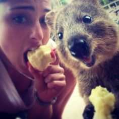 Say goodbye to boring selfies. The Quokka Selfie is the cutest trend in Australia right now. Happy Animals, Animals And Pets, Funny Animals, Cute Animals, Selfies, Funny Animal Photos, Funny Pictures, All Things Cute, Selfie Time