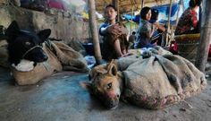 Sign this petition against Yulin Dog Meat Festival Animal Law, Stop Animal Cruelty, Animal Welfare, Animal Rights, In This World, Animal Rescue, Something To Do, Beast, Dog Cat