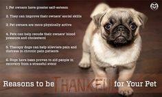 Reasons to be thankful for your pet this Thanksgiving.