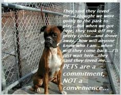 Commitment.  Learn what it means before you bring a pet into your life.