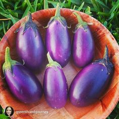repost via @greenthumbjourney Eggplant love