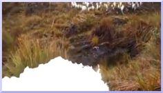 ※画像をクリックするとブログページが開きます。 川のブログ: 滝川流布 =流れゆく水の潤いの傍に、そしてその先へ= 『川の素晴らしい誕生』  より関連イメージを引用しています。#河川 #水源 #River #Source  #自然好きの人と繋がりたい  #自然