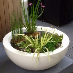 GRP Bowl Planters From potstore.co.uk