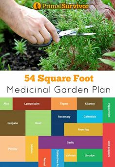 54 Square Foot Medicinal Garden Plan
