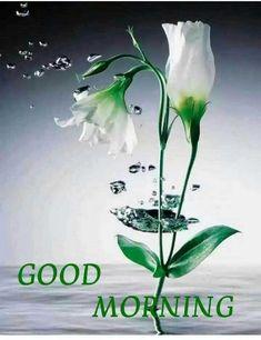 Good Morning Kisses, Good Morning Wednesday, Good Morning Cards, Good Morning Picture, Good Morning Good Night, Morning Pictures, Morning Wish, Morning Images, Good Morning Beautiful Flowers