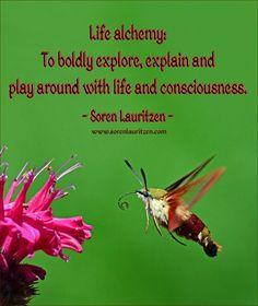 Image quote: Life alchemy. Soren Lauritzen. Hummingbird clearwing moth.
