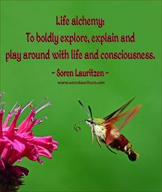 Image quote: Life alchemy. Soren Lauritzen. Hummingbird clearwing moth.