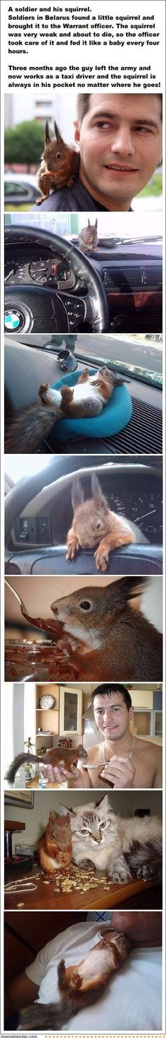 Thank you Pinterest for making me want a pet squirrel