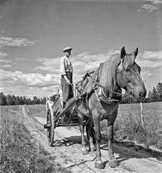 Finnhorse at work 1941 | http://www.vintag.es/2014/10/black-and-white-photos-of-daily-life-in.html