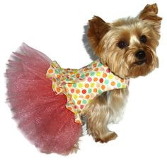 Hey, I found this really awesome Etsy listing at http://www.etsy.com/listing/157453568/dog-clothes-pattern-1701-tutu-dog-dress