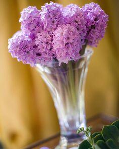 Bom dia com as flores que eu adoro!