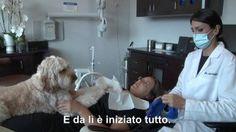 Dal dentista con la dog therapy  sulla poltrona con il cane    di SILVIA NITTOLI