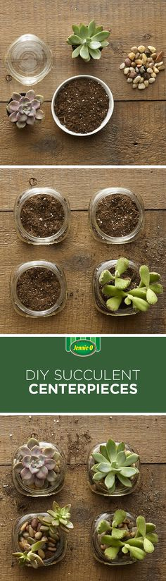 No Spring table is complete without succulents! Put some together for your Easter table. | Easter | Entertaining | Hosting Tips | Succulents