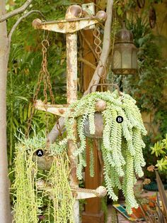 A salvaged metal plant stand creates the impression of the scales of justice when outfitted with trailing succulents. The Madagascar senecio is related to string of beads, and burro's tail is in the same family as groundcover sedums. If pieces break off, root them to start new plants.  A.Madagascar senecio (Senecio antandroi) -- 1  B.Burro's tail (Sedum morganianum) -- 1