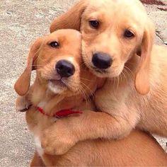 Aww give me a hug