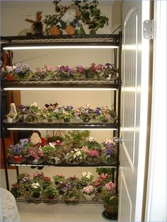 Share your pic of growing shelf. - African Violets Forum - GardenWeb ~ I love this. Indoor Plant Shelves, Indoor Plant Pots, Indoor Gardening, Violet Garden, African House, Diy Plant Stand, Plant Stands, Saintpaulia, Inside Plants