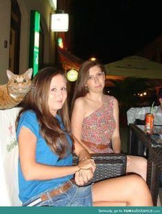 Photobomb level: cat