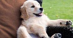 #pets Pets - Dicas, Cursos e E-books: Apaixonado por Pets? Que tal ser dono de sua própria Pet Shop? =>  Dicas para cuidar melhor… #petspics