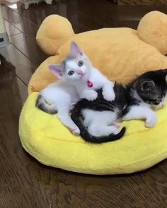 Cute Baby Cats, Cute Cats And Kittens, Cute Funny Animals, Cute Baby Animals, Kittens Cutest, Funny Cats, Beautiful Cats, Animals Beautiful, Pretty Cats