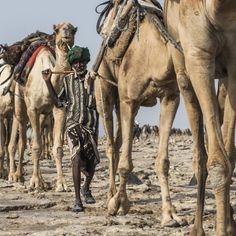 #kamel #karawane in der #danakil #wüste auf dem Weg zum Salzabbau #äthiopien #afar  #99igers #99instagramers by 99igers