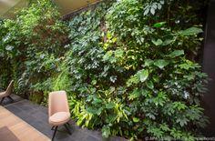 Echte Pflanzen ersetzen die Tapete #News #Wohnen