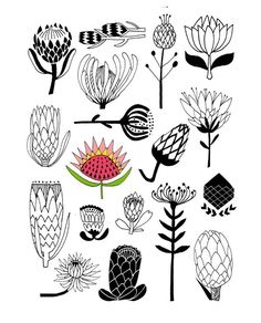 Flower illustrations for art journals and creative scrapbooks Protea Art, Protea Flower, Flowers, Art Floral, Motif Floral, Art And Illustration, Botanical Illustration, Flower Illustrations, Oil Painting Abstract