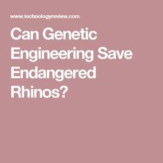 Can Genetic Engineering Save Endangered Rhinos?