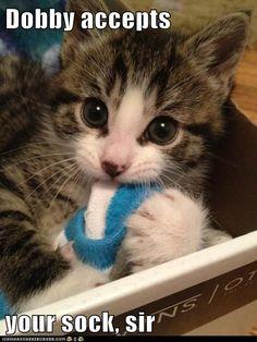 Dobby accepts  your sock, sir